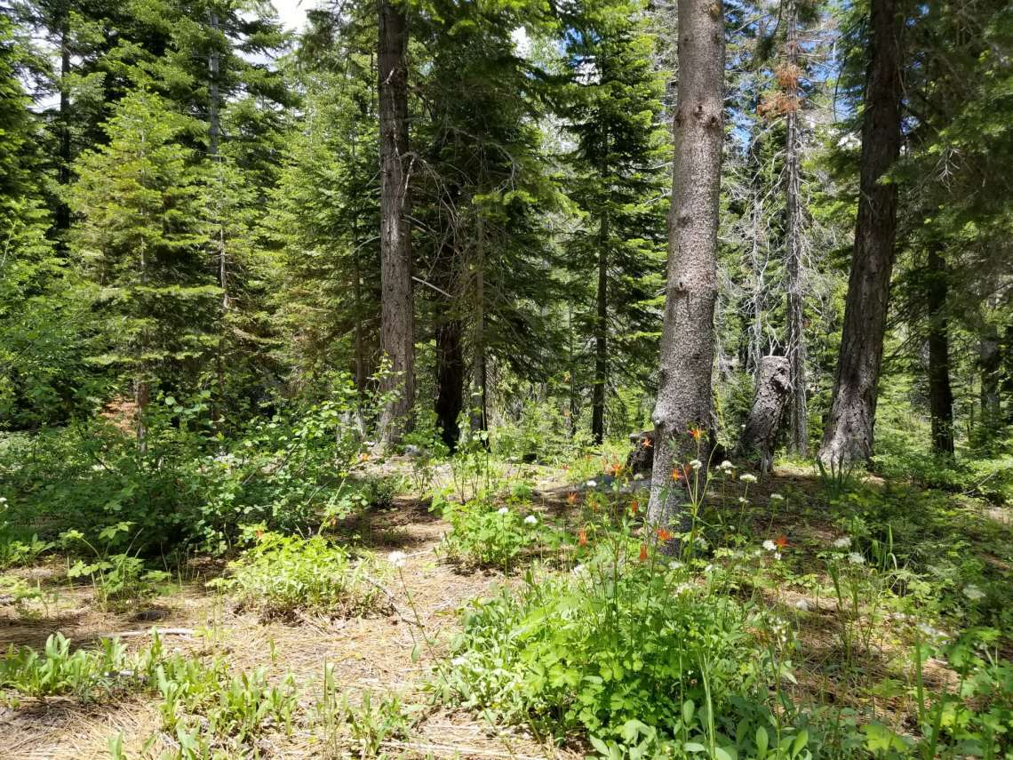 Vacant Land for Sale in Alpine Meadows - Lake Tahoe Real Estate