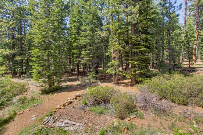 Forested Land backing to home