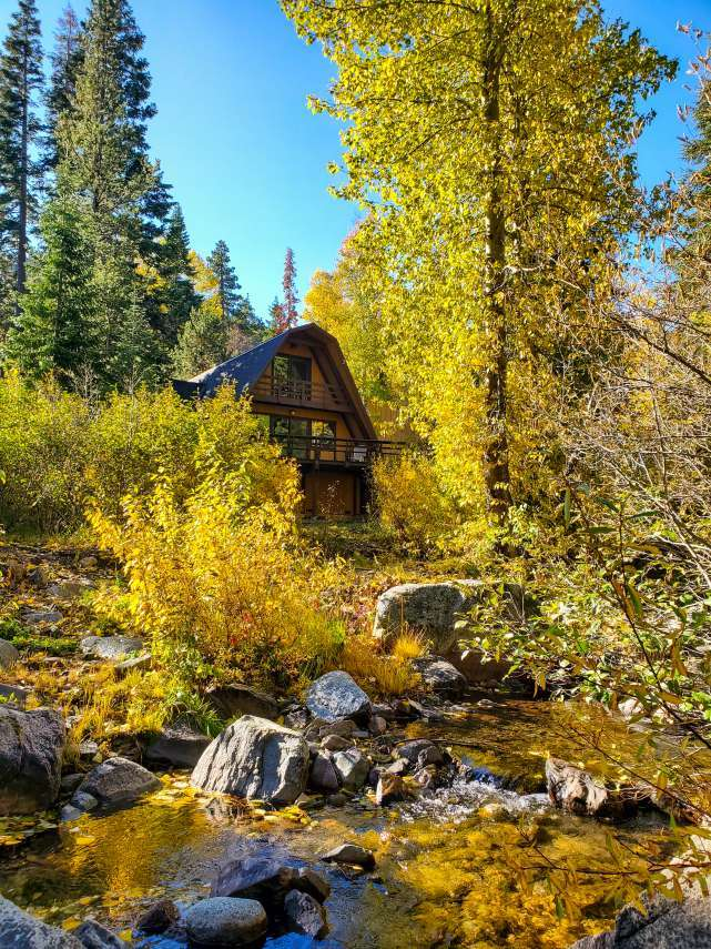 Alpine Meadows Autumn Foliage