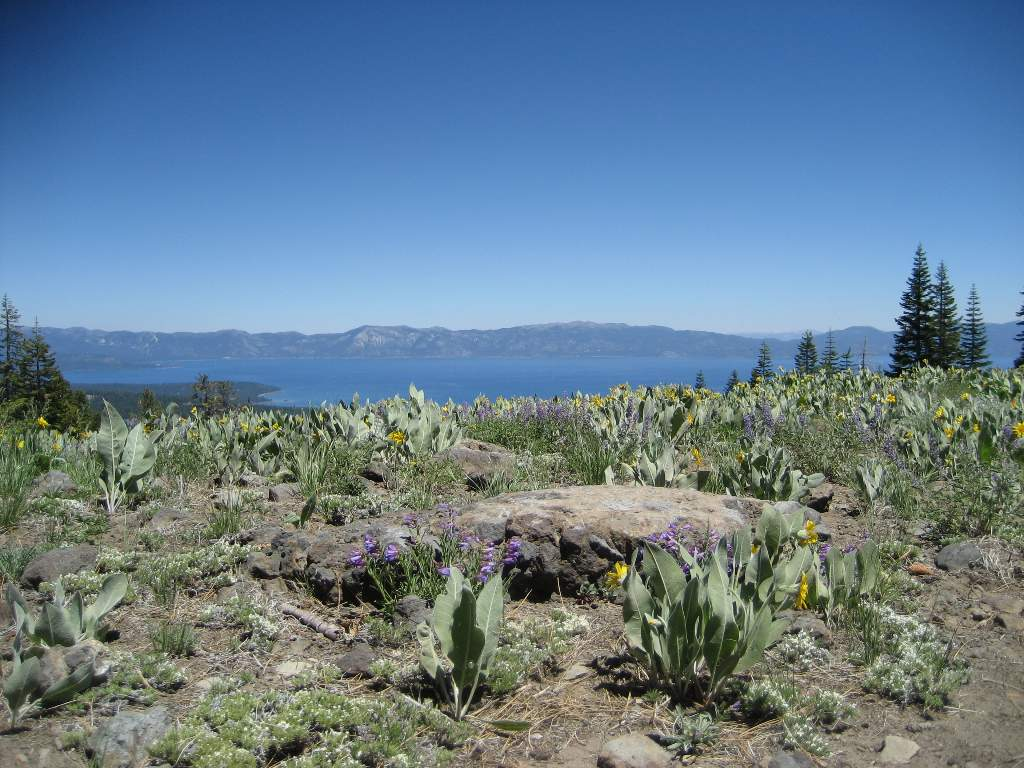 View of Tahoe from Lakeview in Alpine Meadows