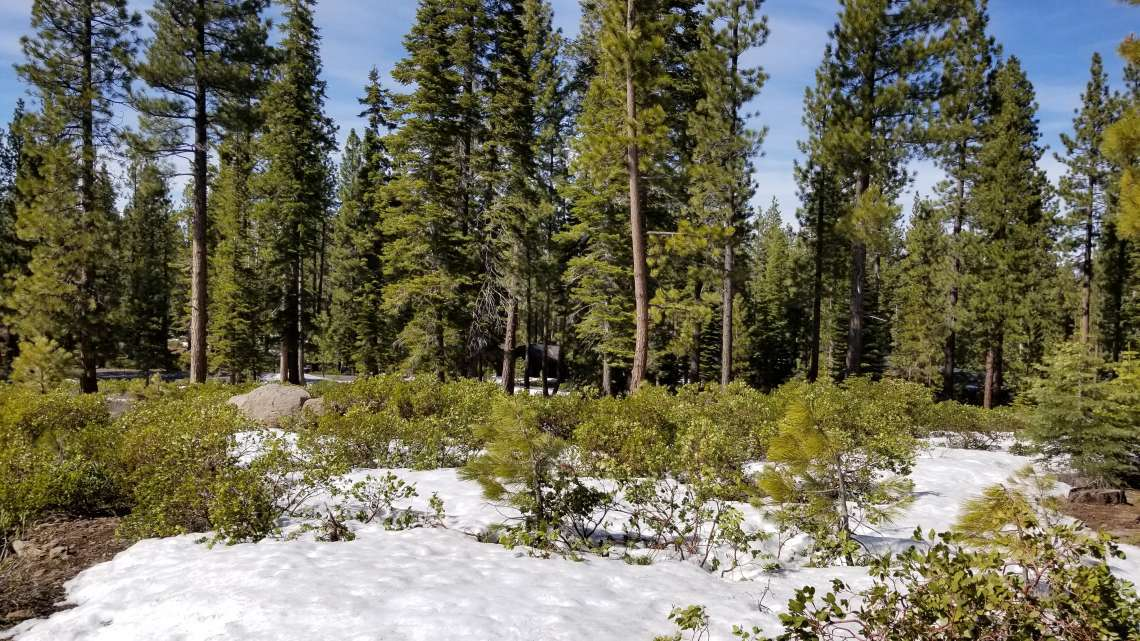 Lahontan Land for Sale  | 8601 Lloyd Tevis