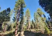 Magical Tahoe Vista Lot | Tahoe Real Estate