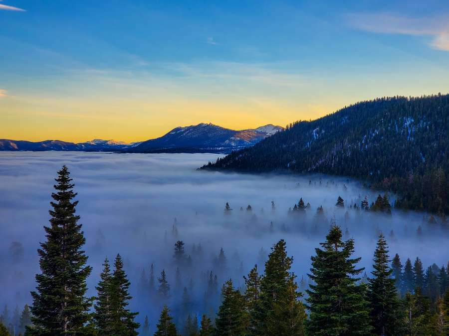 West-Shore-Lake-Tahoe-Trees-in-Fog