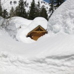 Deep Snow In Alpine Meadows