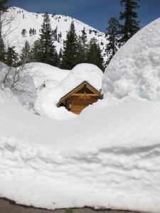 Deep Snow In Alpine Meadows