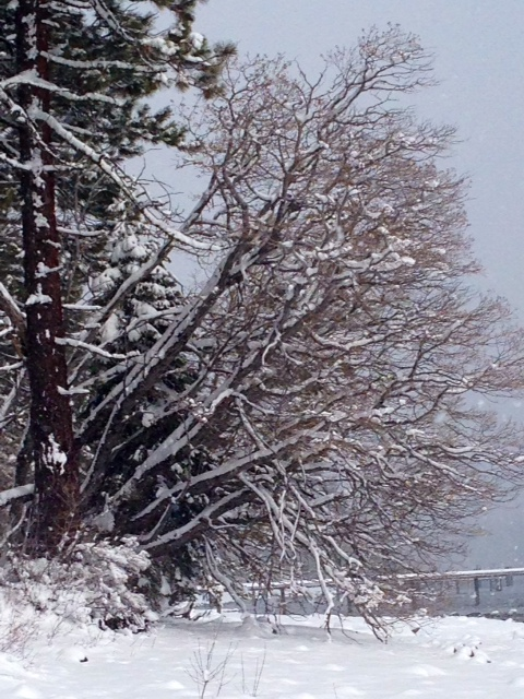 Image of Homewood Snow for 5 Feet of Fresh Snow in Lake Tahoe 2014 blog post