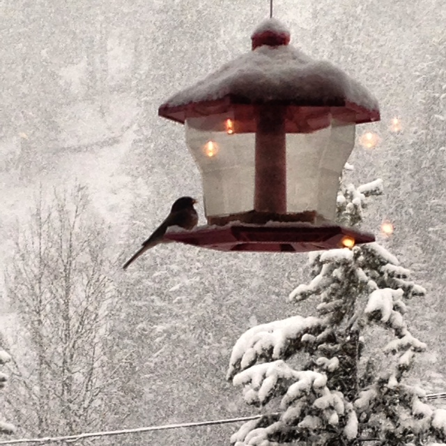 Image of bird at bird feeder Spring snow in Lake Tahoe for 5 Feet of Fresh Snow in Lake Tahoe 2014 blog post