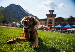 Peaks & Paws at Squaw Valley for Top 10 End of Summer Events in Lake Tahoe 2014 blog post
