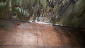 image of Water Damage - Organic Growth for why you need a realtor post