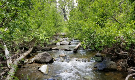 Alpine Meadows Vacant Land for Sale Backing to Bear Creek