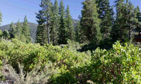 Image of trees for Lahontan Land for Sale