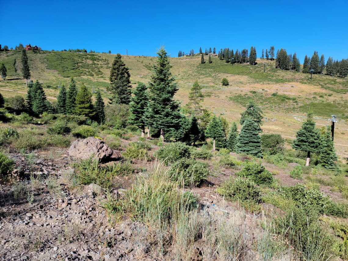 Tahoe Donner Land for Sale in Truckee